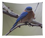 Blue Bird Of Happiness Tapestry