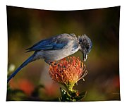 Blue Jay 1 Tapestry