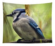 Blue Jay On A Misty Spring Day - Square Format Tapestry