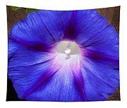 Blue Morning Glory Tapestry