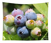 Blueberries Closeup Tapestry