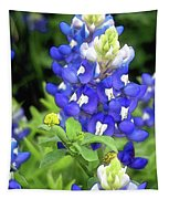 Bluebonnets Blooming Tapestry