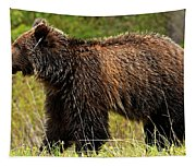 Bluetooth Grizzly 2 Tapestry