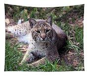 Bobcat 17 Tapestry