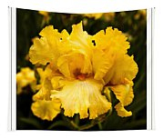 Bright Bright Spring Yellow Iris Flower Fine Art Photography Print  Tapestry