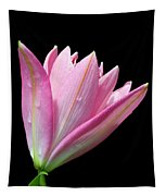 Bright Pink Trumpet Lily  Tapestry