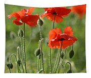 Bright Poppies 1 Tapestry