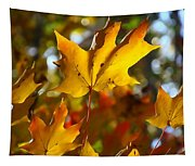 Brilliant Autumn Light And Color Tapestry