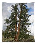 Brisslecone Pine Tree Tapestry