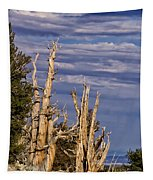 Bristlecone Warriors Tapestry