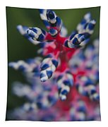 Bromeliad - Aechmia Dichlamydea - Guzmania Lingulata Tapestry