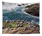 Brown Pelicans And Gulls On The Reef Tapestry