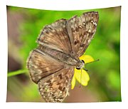 Brown Skipper Butterfly Square Tapestry