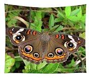 Buckeye Butterfly Tapestry