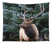 Bull Elk By Blue Spruce Tapestry