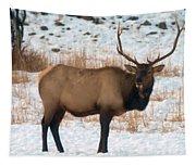 Bull Elk  Tapestry