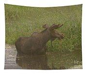 Bull Moose Looking Around  Tapestry