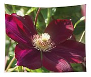 Burgundy Clematis Profile   # Tapestry