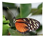 Key West Butterfly 2 Tapestry
