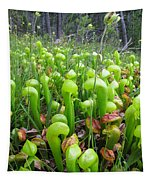 California Pitcher Plant Tapestry