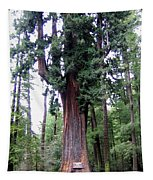 California Redwoods 6 Tapestry