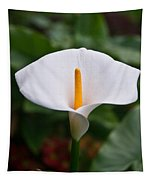 Calla Lily Laterally Expanded Tapestry