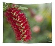 Callistemon Citrinus - Crimson Bottlebrush Tapestry