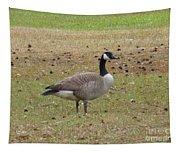 Canadian Goose Strutting  Tapestry