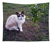 Cat 'n Orange Tree Tapestry