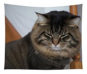 Cat Nap Time Tapestry