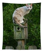 Cat Perched On A Bird House Tapestry