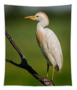 Cattle Egret On Stick Tapestry
