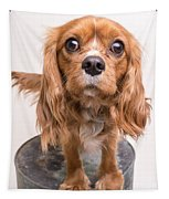 Cavalier King Charles Spaniel Puppy Tapestry