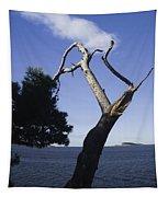 Cavtat Tree Tapestry