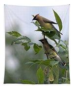 Cedar Waxwings Tapestry