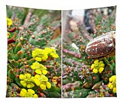Chafer Beetle On Medusa Succulent In 3d Stereo Tapestry