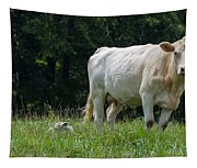 Charolais Cow And Calf In Field Tapestry