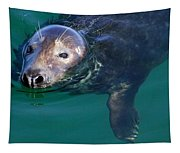 Chatham Harbor Seal Tapestry