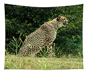 Cheetah-79 Tapestry