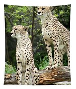 Cheetah's 02 Tapestry