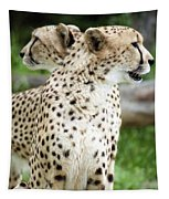 Cheetah's 04 Tapestry
