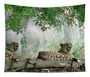 Cheetahs-120 Tapestry