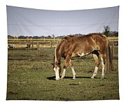 Chestnut In The Pasture Tapestry