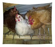 Chick Trio  Tapestry