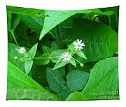 Chickweed Trio Tapestry