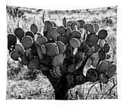Chihuahua Desert Cactus Bw Tapestry