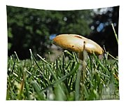 Chipmunks View Of A Mushroom Tapestry