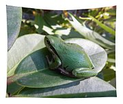 Chorus Frog On A Rhodo Tapestry
