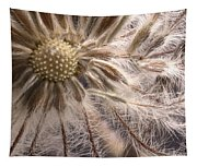 Clematis Seedpod Close Up Tapestry
