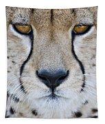 Close-up Of A Cheetah Acinonyx Jubatus Tapestry